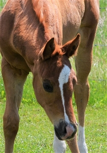 Shine Chic Shine X Daughter of Nu Chex to Cash